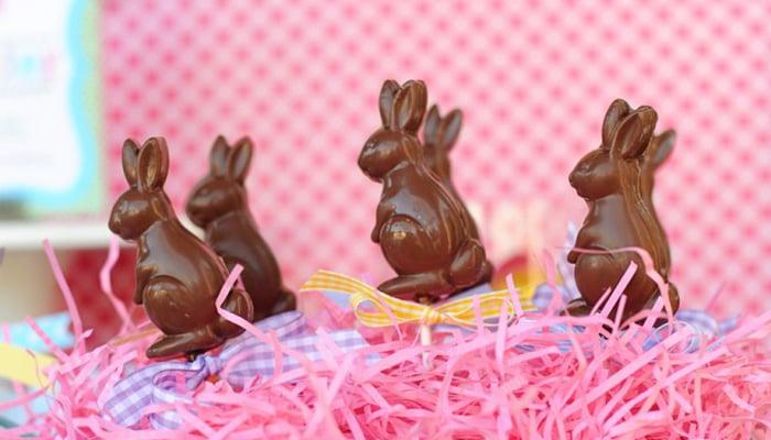 Bunny pops header