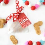 Handmade Valentine Ideas : I'm Nuts about You Valentine